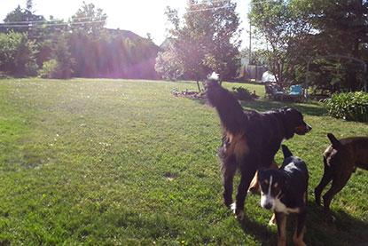 Entraînement/dressage de chien et pension à Gatineau et Ottawa