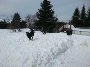 Pension et garderie pour chiens à Gatineau - Air exercice