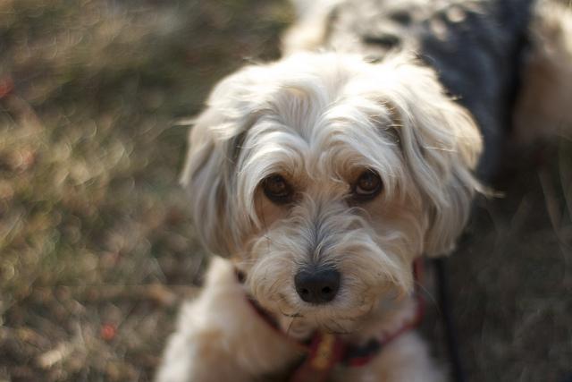 Les chiens sont doués de sentiments au Québec